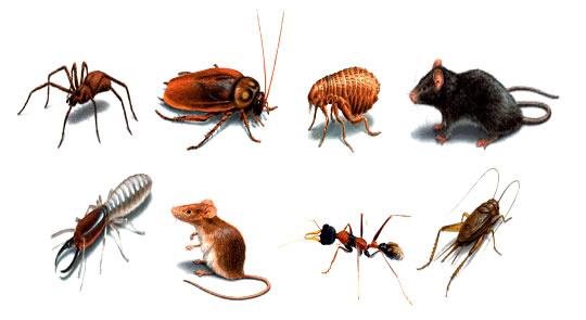 shop thuốc diệt côn trùng